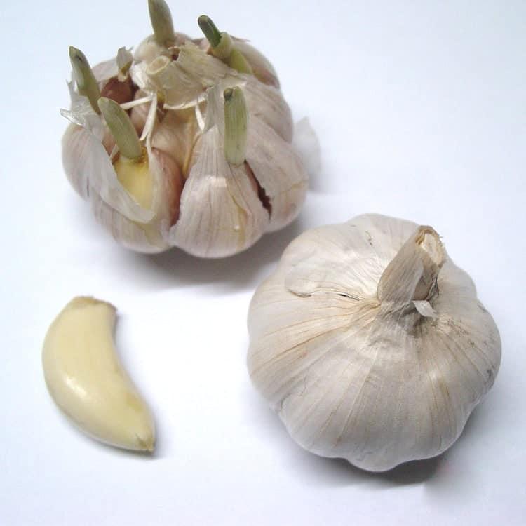 Луковицы чеснока