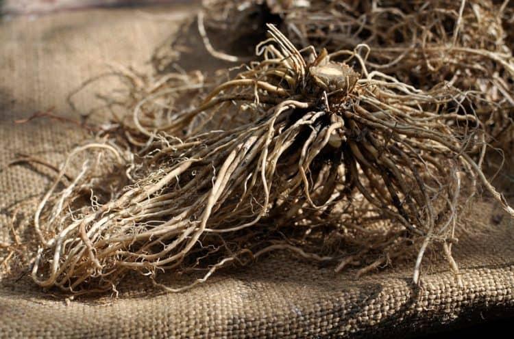 Корневище с корнями валерианы