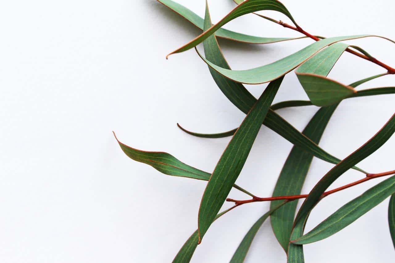 Травы для Легких