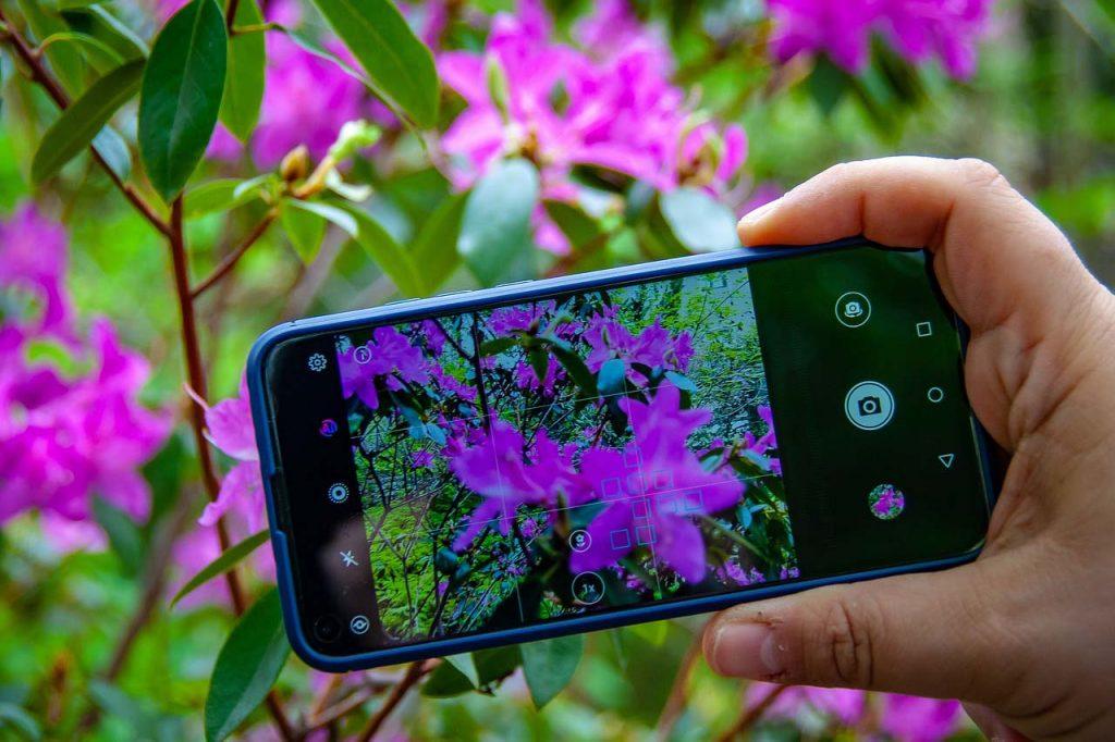 Как Определить Растение по Фото